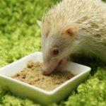 乳酸菌のエサになる食べ物!オリゴ糖と食物繊維で効果倍増