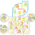 三大乳酸菌の種類と効果の特徴