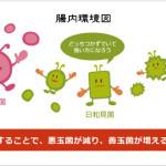 乳酸菌の効果その①、便秘解消・予防効果を解説!便秘におすすめの乳酸菌サプリ