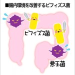 生きて腸まで届くビフィズス菌・乳酸菌は詐欺商品