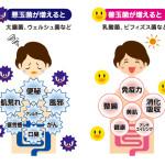 腸まで届く乳酸菌のその末路